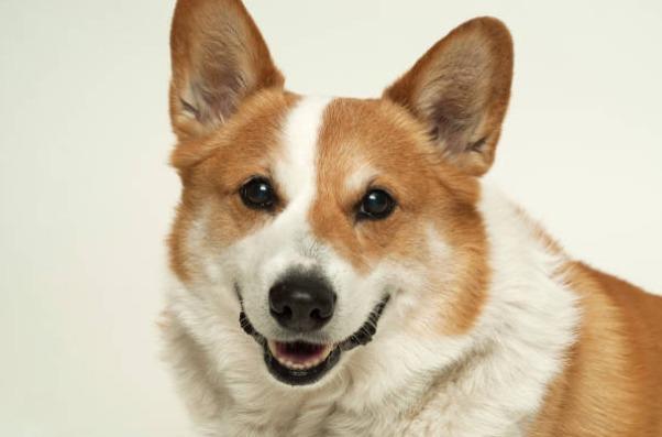 2018-09-26_13h30_15 あなたは猫派?それとも犬派?日本での飼育割合はどのくらい?